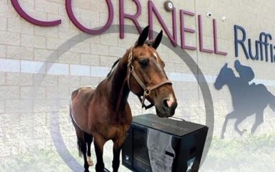 Cornell University uses EqueTom for clinical studies