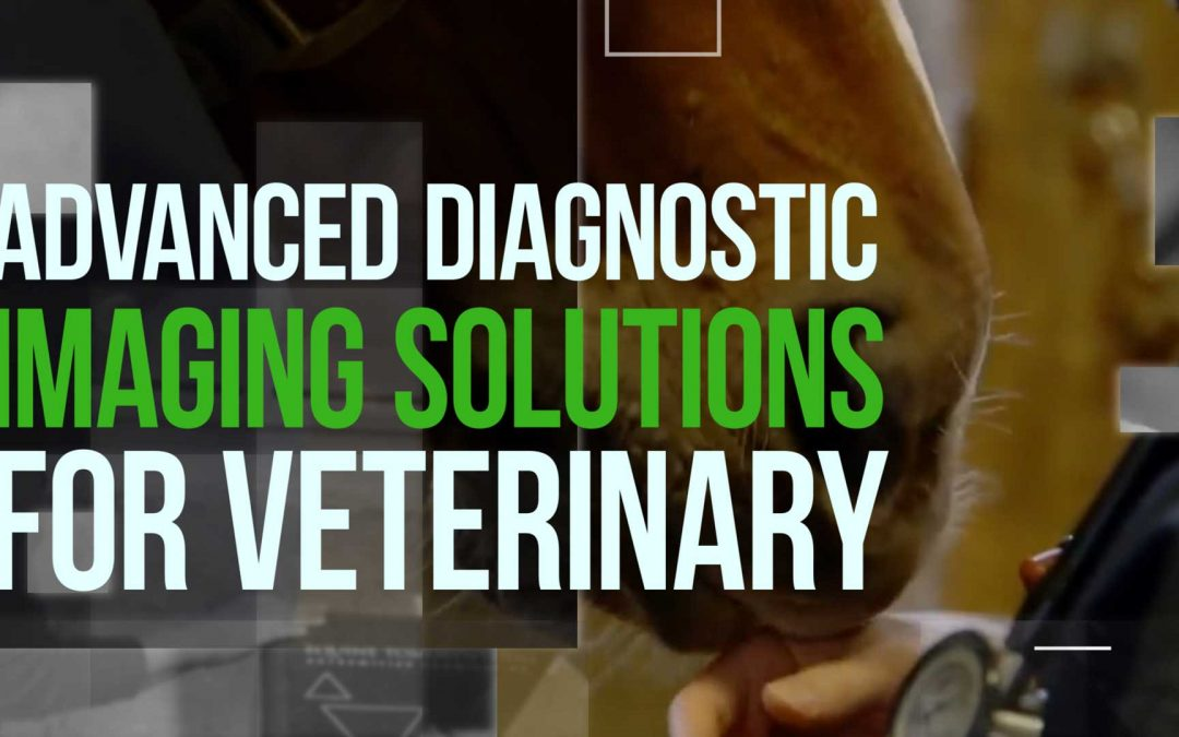 Diagnostic imaging solutions at the service of your veterinary practice.