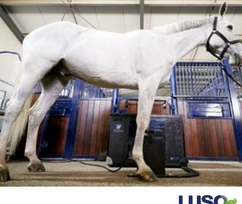 EqueTom – the first tomosynthesis system for equine scanning