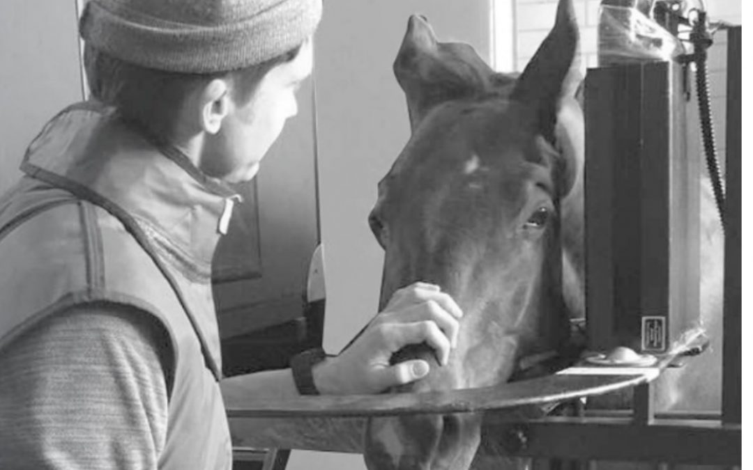 EqueTom performs dental and maxillary sinus scans