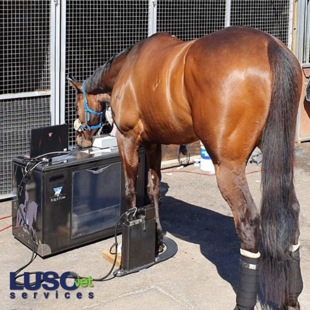 EqueTom, the first tomosynthesis for equine scanning, is mobile!