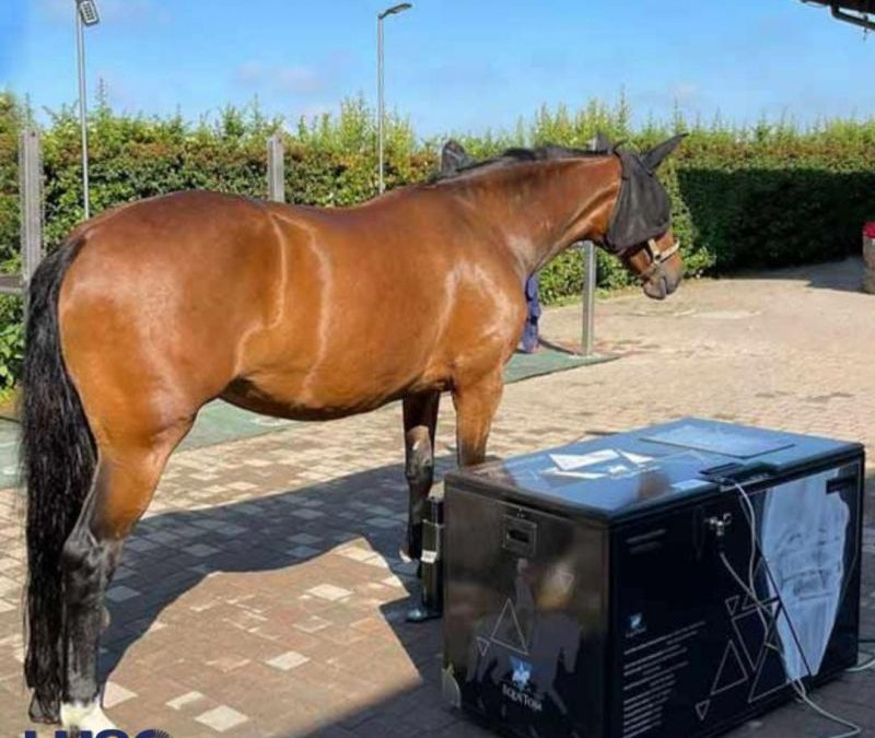 EqueTom lands in Italy