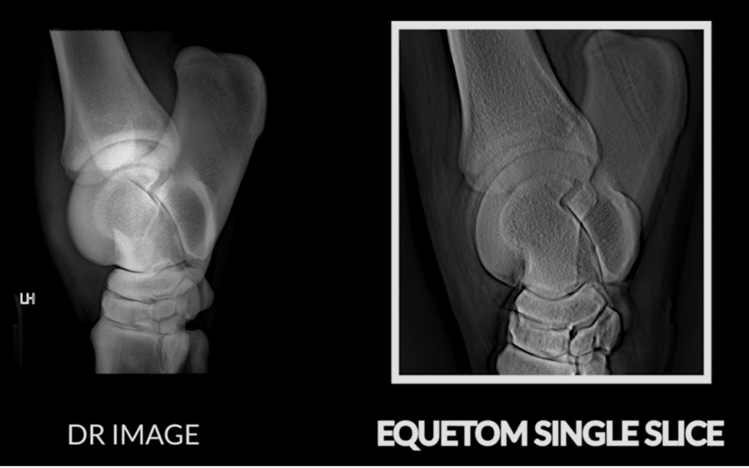 Why is the EqueTom, the first tomosynthesis system for equine scanning, so revolutionary?